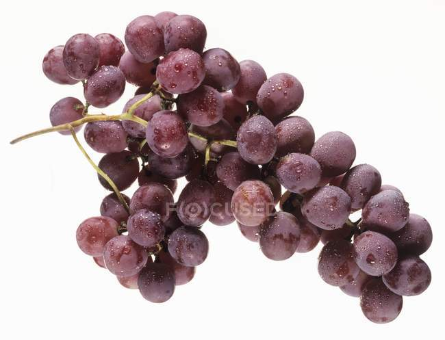 Red grapes with dew — Stock Photo