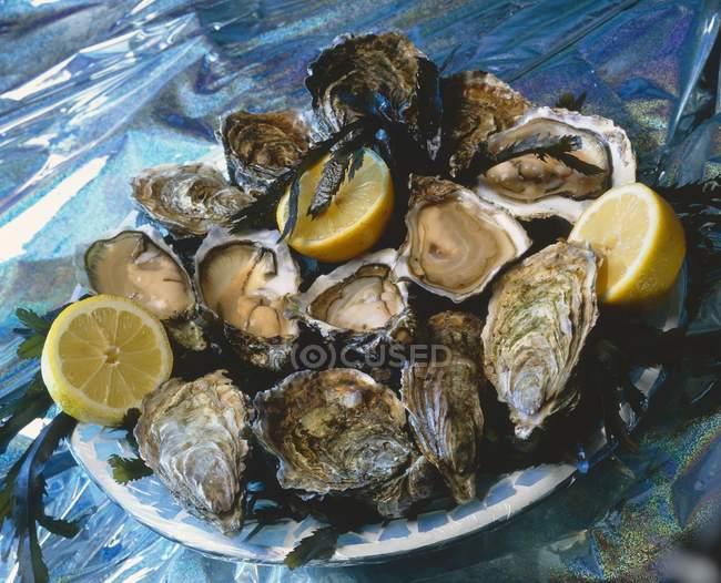 Piatto di ostriche e metà del limone — Foto stock