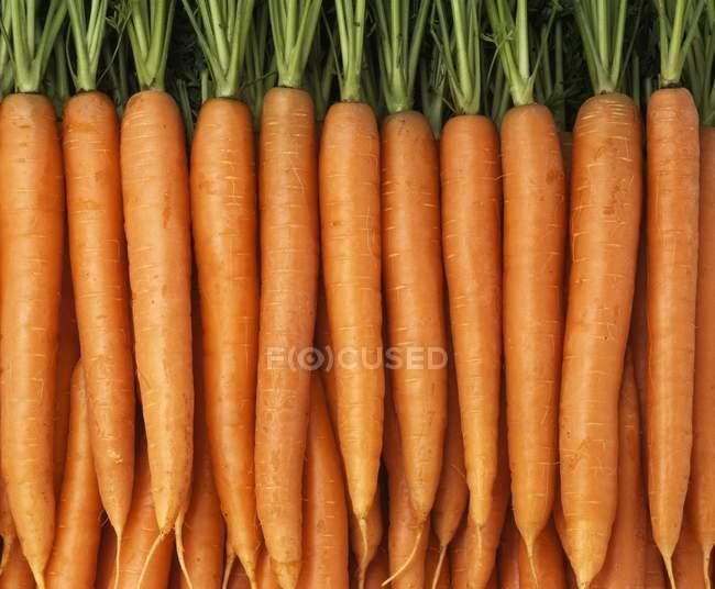 Zanahorias maduras frescas con tapas - foto de stock