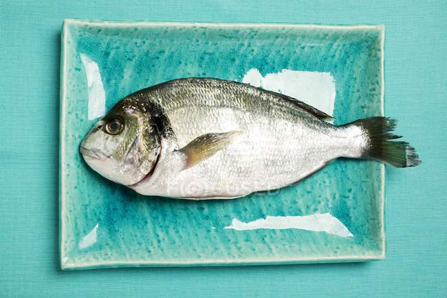 Raw sea bream on blue plate — Stock Photo