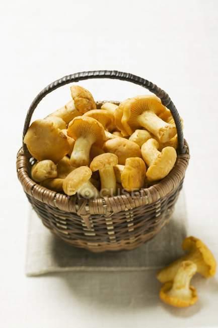 Chanterelles in basket, close-up — Stock Photo