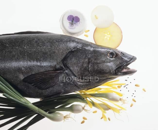 Raw Black sea bass — Stock Photo
