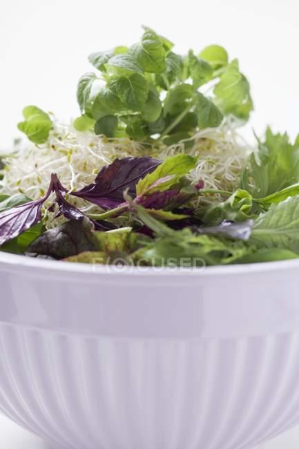 Germogli, erbe e foglie di insalata — Foto stock