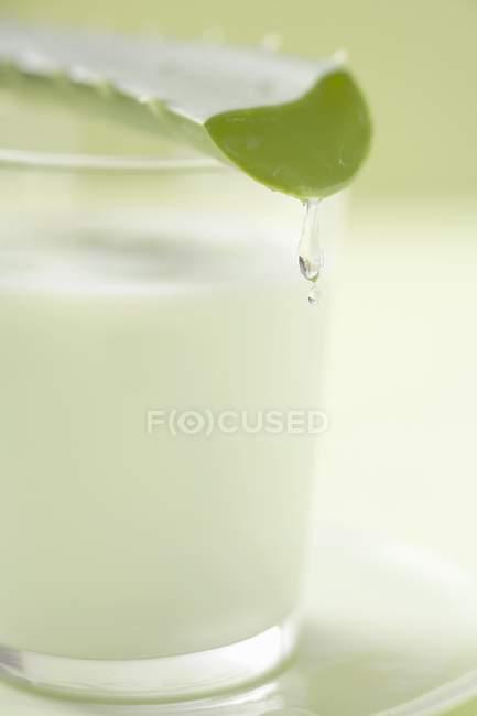 Foglia di aloe vera su vetro — Foto stock