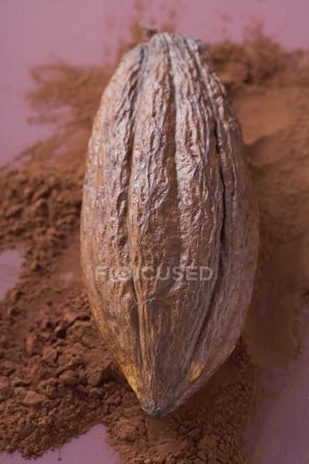 Fruto de cacao en polvo - foto de stock