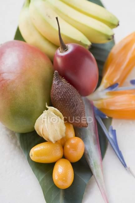 Свежие экзотические фрукты — стоковое фото