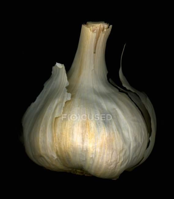 Луковица чеснока — стоковое фото