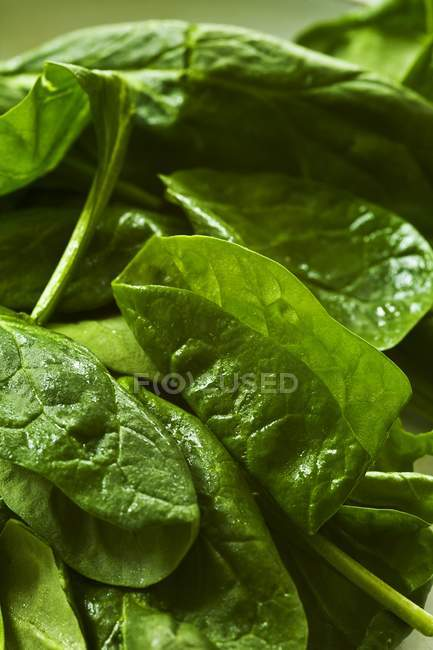 Fresh Geen Spinach — Stock Photo