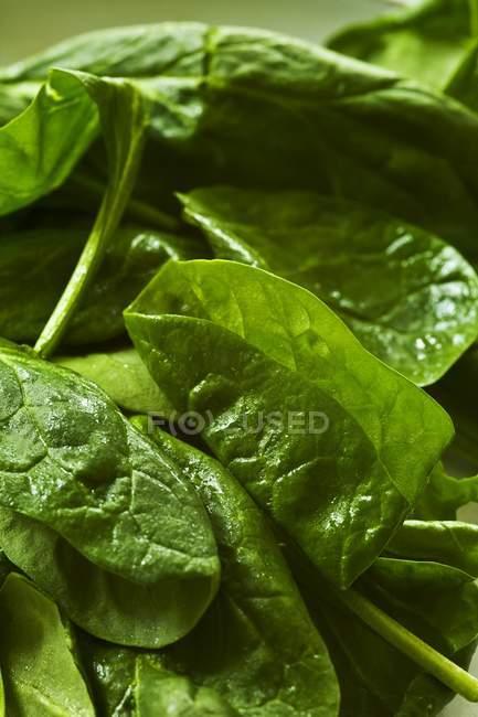 Espinacas frescas Geen - foto de stock