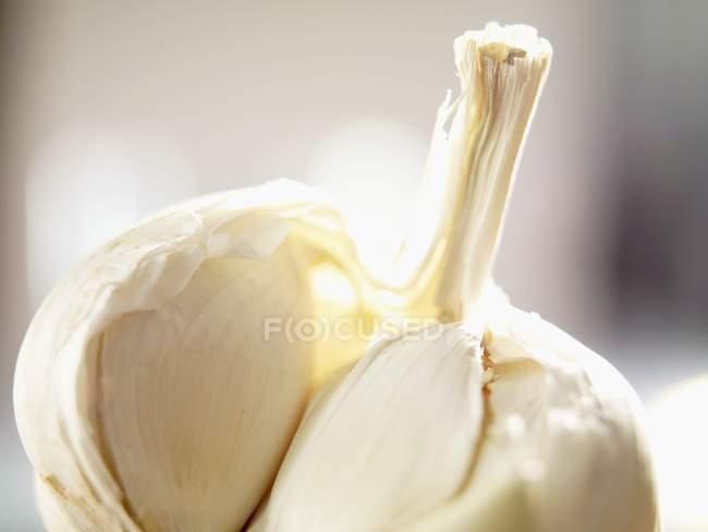 Bulbo de ajo roto abierto - foto de stock