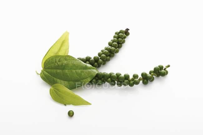Closeup de exibição de clusters de pimenta verde com folhas — Fotografia de Stock