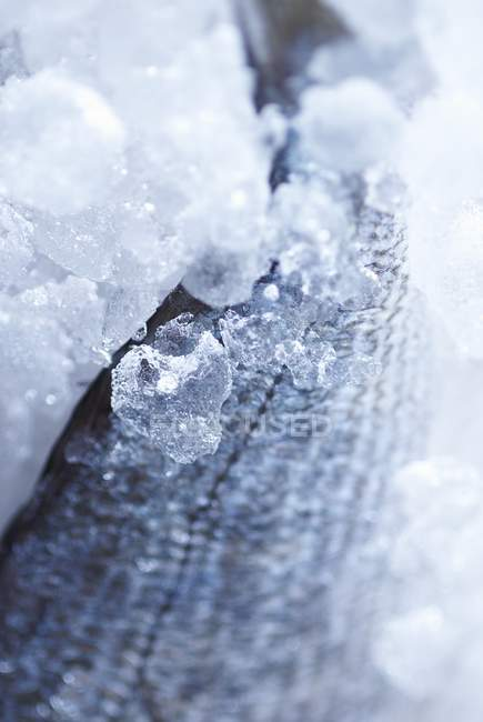 Fresh fish in ice — Stock Photo