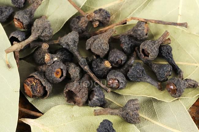 Vue rapprochée des bourgeons de cannelle séchés — Photo de stock