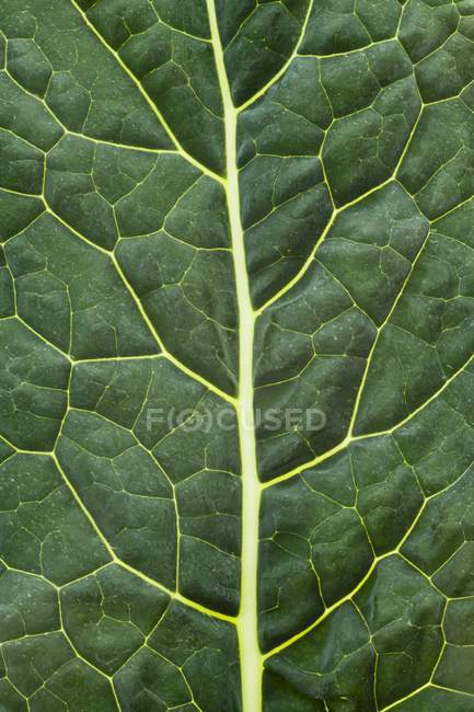 Green Cabbage leaf — Stock Photo