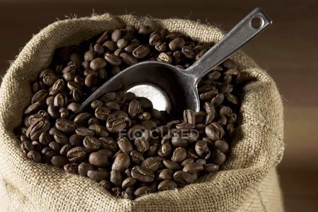 Кофейные зерна в джутовом мешке — стоковое фото
