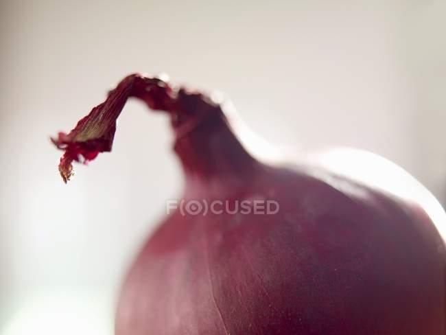 Sem casca de cebola vermelha — Fotografia de Stock