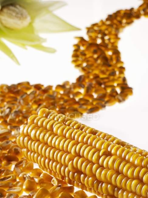 Кукуруза в початках и кукурузы ядра — стоковое фото