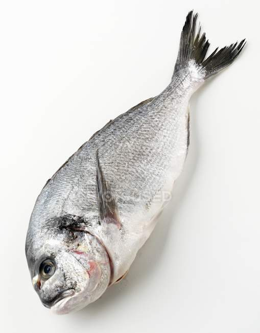 Fresh raw sea bream — Stock Photo