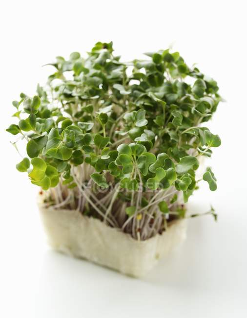 Germes de radis et cress daïkon — Photo de stock