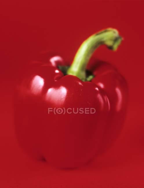 Maturare peperone rosso — Foto stock