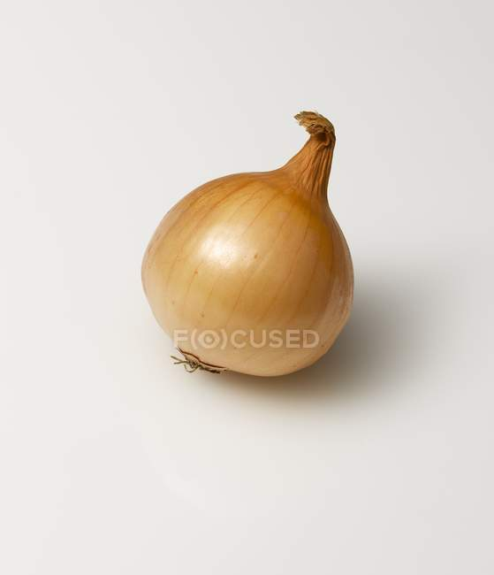 Whole  brown onion — Stock Photo