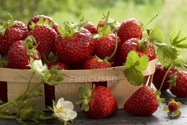Punnet di fragole appena raccolte — Foto stock