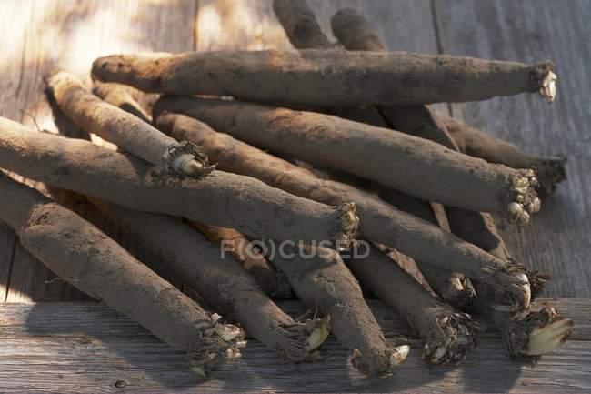 Várias raízes scorzonera — Fotografia de Stock