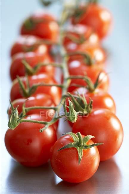 Cherry tomatoes on vine — Stock Photo