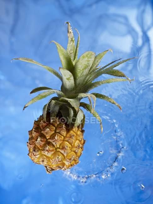 Спелый детский ананас — стоковое фото