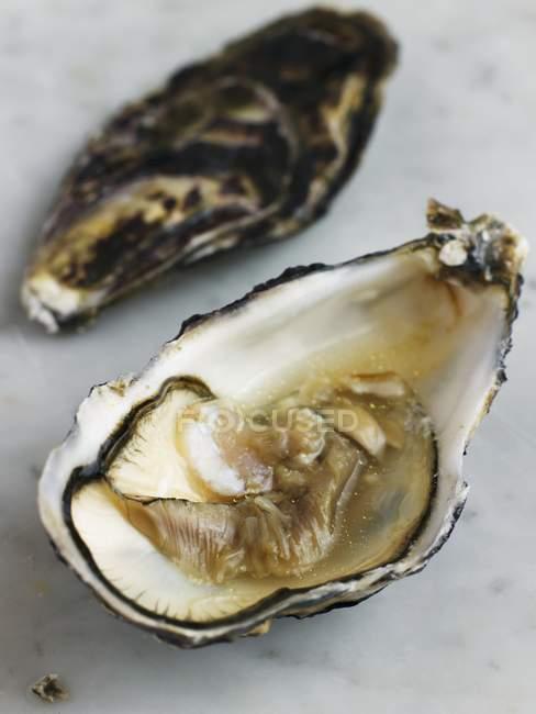 Abriu a ostra em mármore — Fotografia de Stock