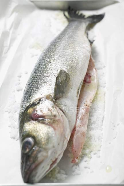 Fresh sea bass with salt — Stock Photo