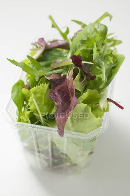 Змішані салат листя — стокове фото