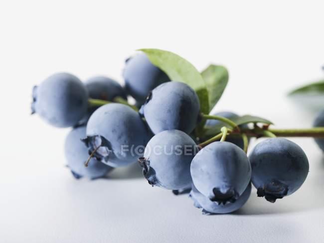 Bunch of fresh blueberries — Stock Photo