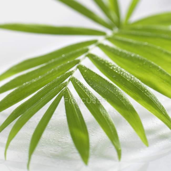 Вид крупным планом пальмового листа с капельками воды — стоковое фото