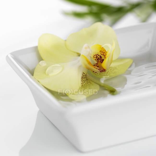 Closeup vista de corte orquídea amarela no prato branco da água — Fotografia de Stock