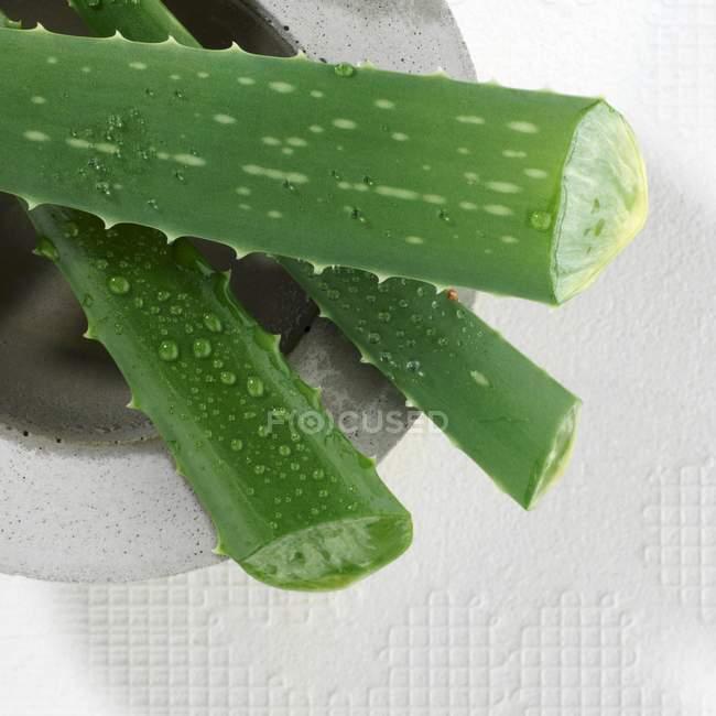 Folhas de Aole vera na argamassa — Fotografia de Stock