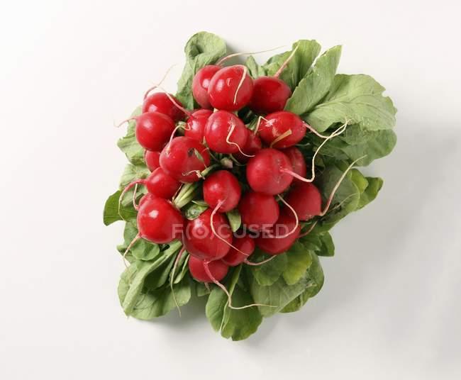 Bunch of fresh picked radishes — Stock Photo