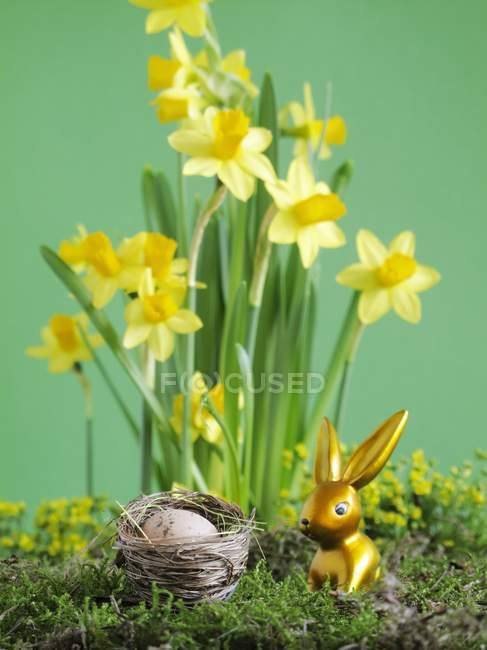 Closeup view of gold Easter bunny in front of narcissi flowers — Stock Photo