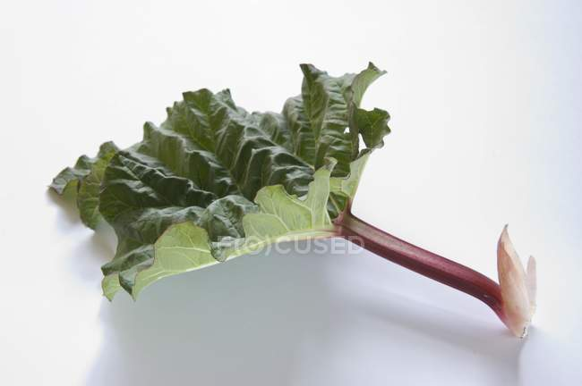 Stick of rhubarb with leaf — Stock Photo