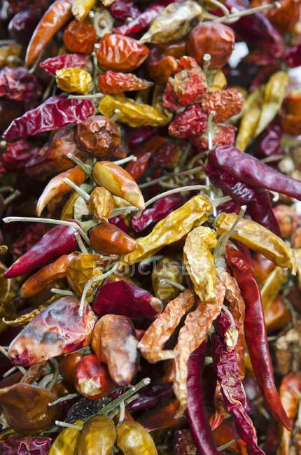 Dried chilli peppers — Photo de stock