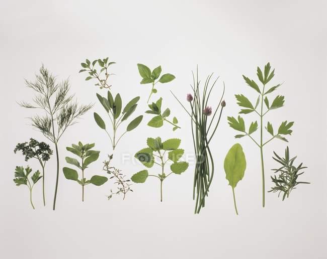Diverses herbes fraîches — Photo de stock
