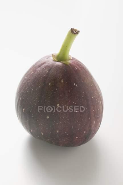 Свежий инжир фиолетовый — стоковое фото