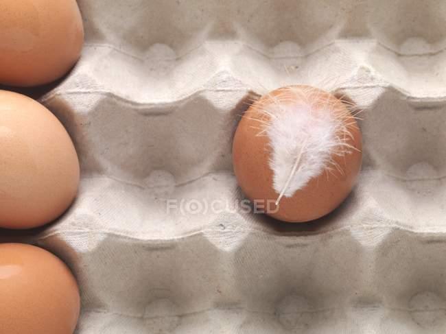 Ovo de galinha marrom com pena — Fotografia de Stock