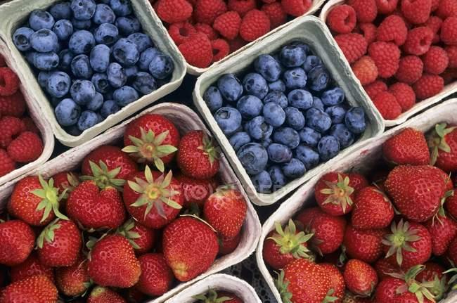 Fresas con arándanos y frambuesas - foto de stock