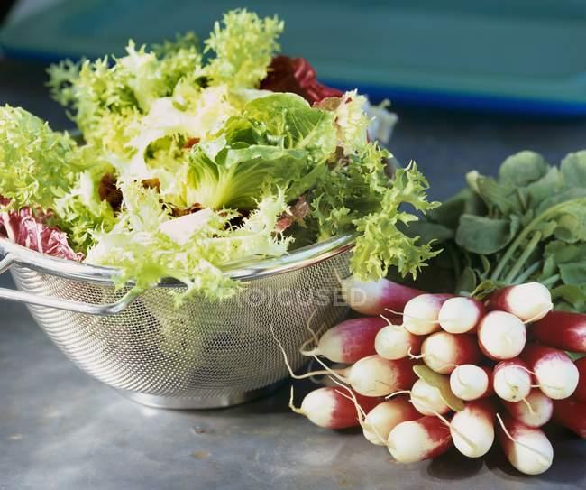 Ensalada mixta de hojas y rábanos - foto de stock