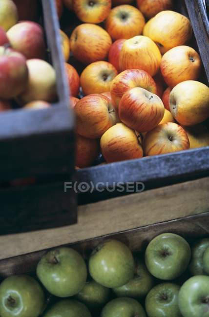 Different kinds of apples — Stock Photo
