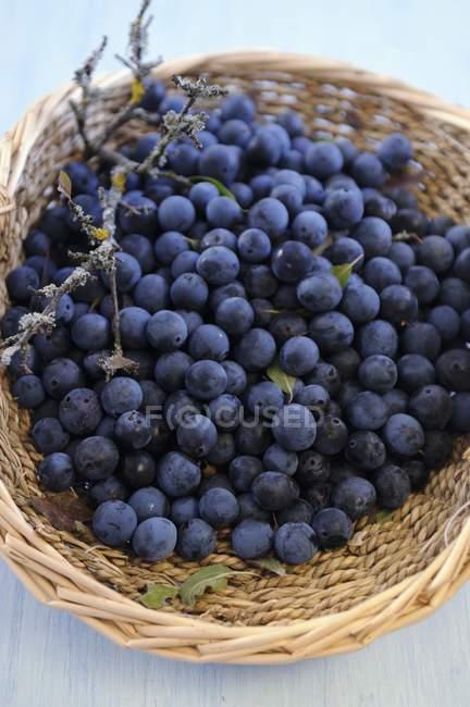 Basket of sloe berries — Stock Photo