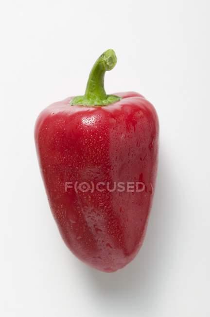 Pepe rosso con gocce d'acqua — Foto stock