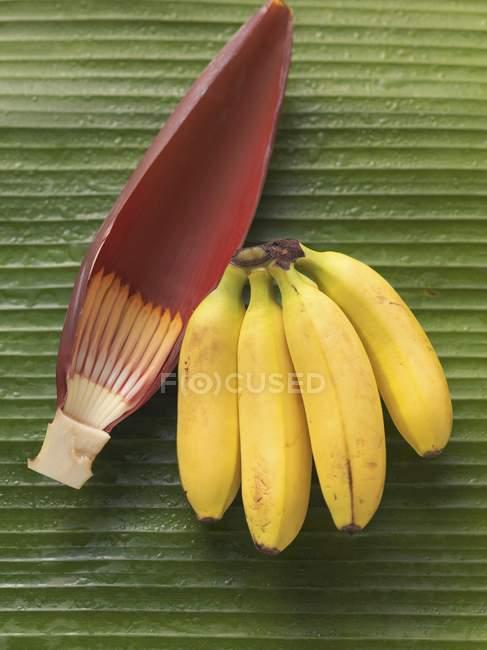 Связка бананов и цветок банана — стоковое фото