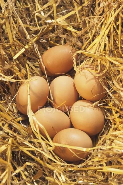 Семь коричневые яйца — стоковое фото